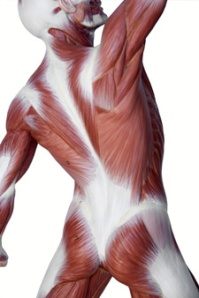 fascia stretch